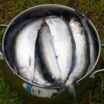 рыбалка в Судаке на сельдь